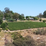 Digging for gold in Beechworth