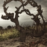 Grenache – Great even for the in-laws
