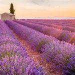 The Provence rosé revolution