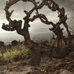 Old Vine Treasures