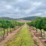 Ballandean Estate Wines Nebbiolo 2018